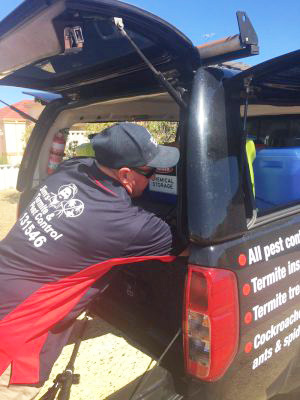 Termite and Pest Control Inspection Perth