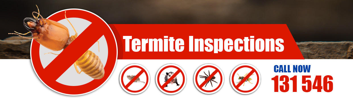 Perth Termite and Pests Control