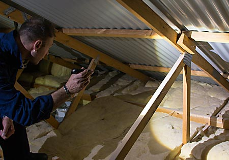 Termite and Pest Inspection