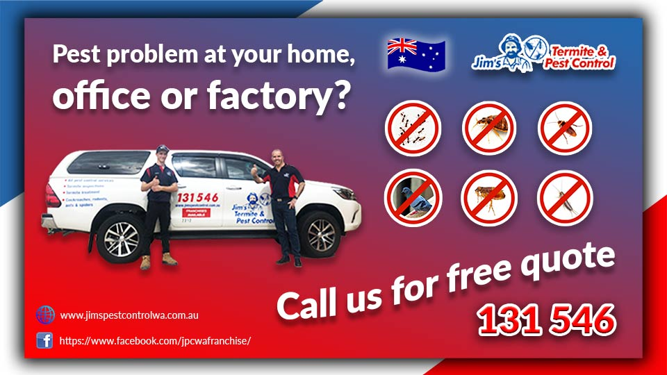 Pest Problem Jims Pest Control Perth